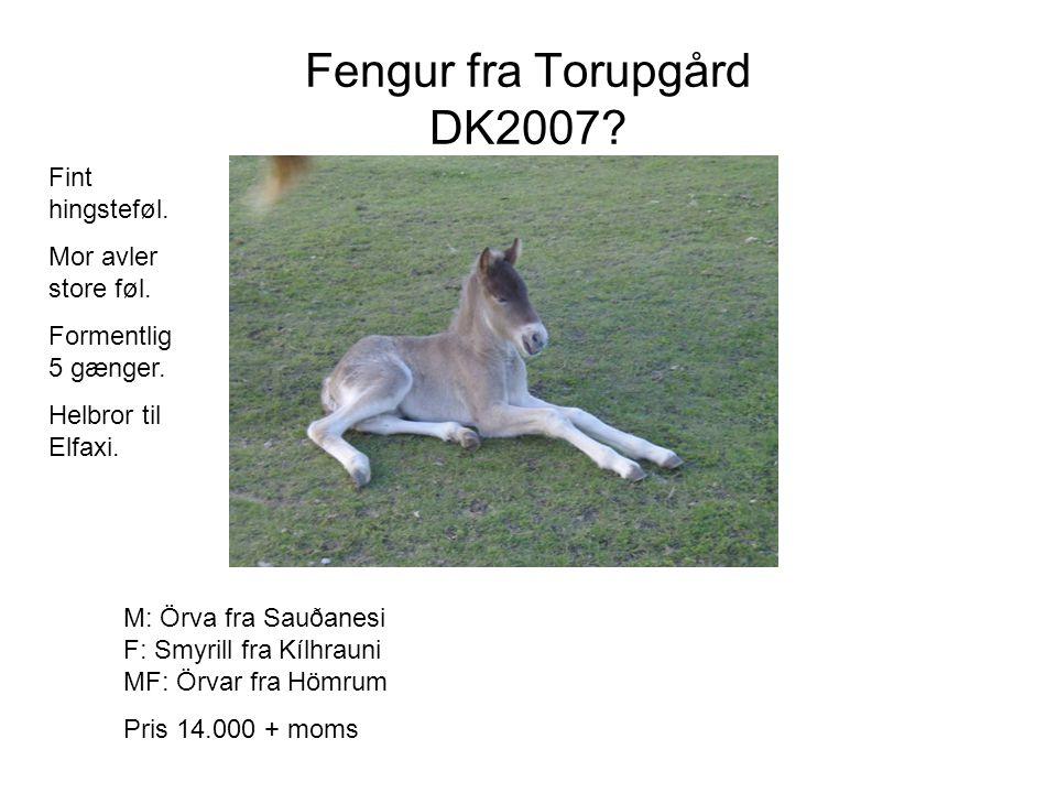 Fengur fra Torupgård DK2007