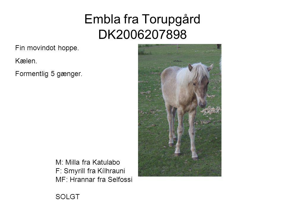 Embla fra Torupgård DK2006207898 Fin movindot hoppe. Kælen.