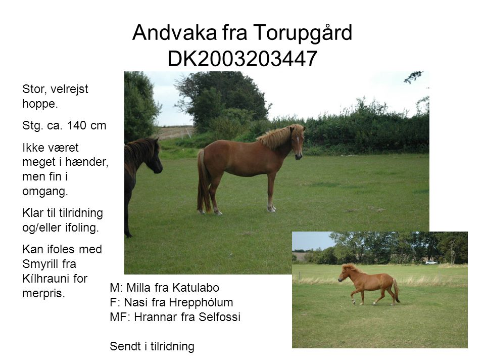Andvaka fra Torupgård DK2003203447