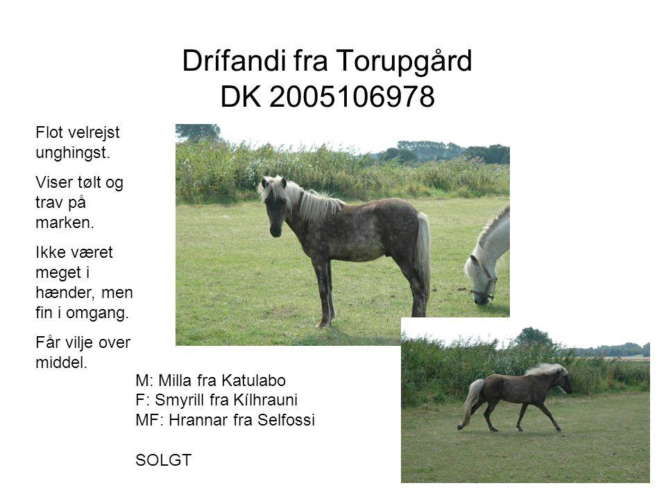 Drífandi fra Torupgård DK 2005106978