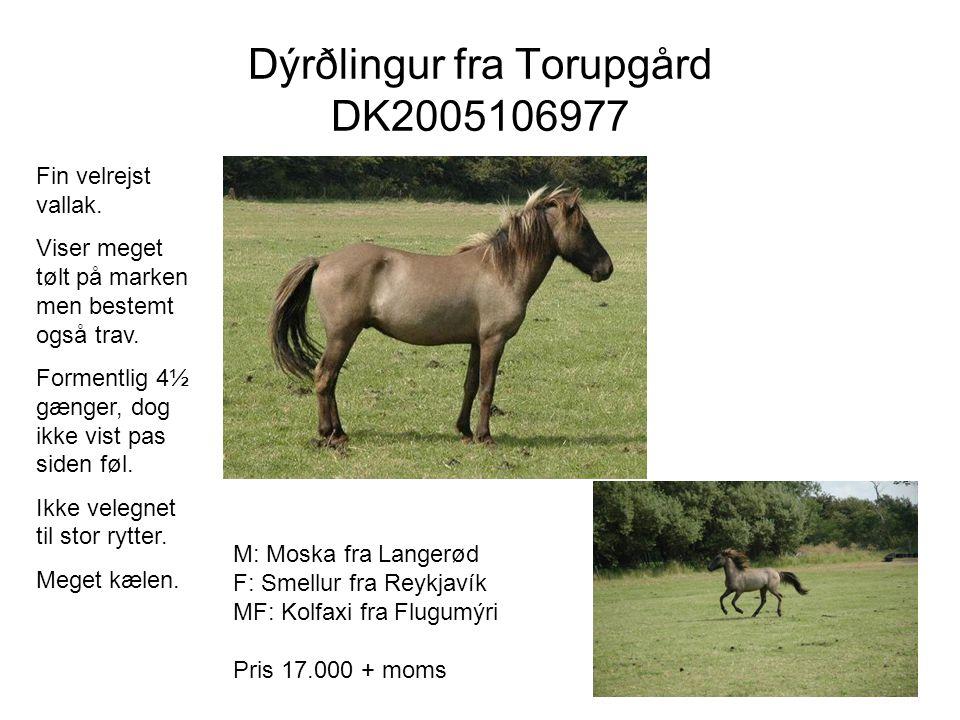 Dýrðlingur fra Torupgård DK2005106977