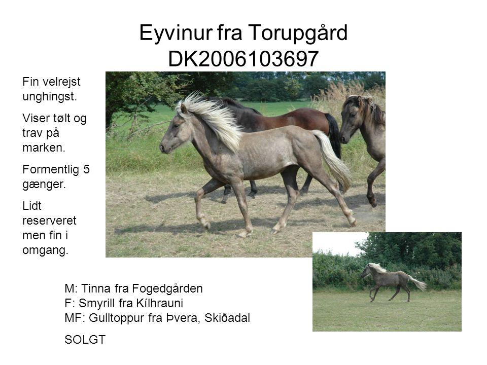 Eyvinur fra Torupgård DK2006103697