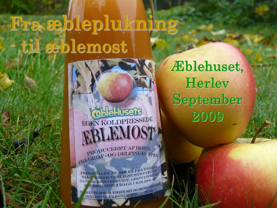 Fra æbleplukning - til æblemost Æblehuset, Herlev September 2009