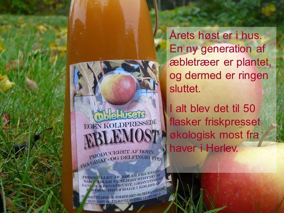 Årets høst er i hus. En ny generation af æbletræer er plantet, og dermed er ringen sluttet.
