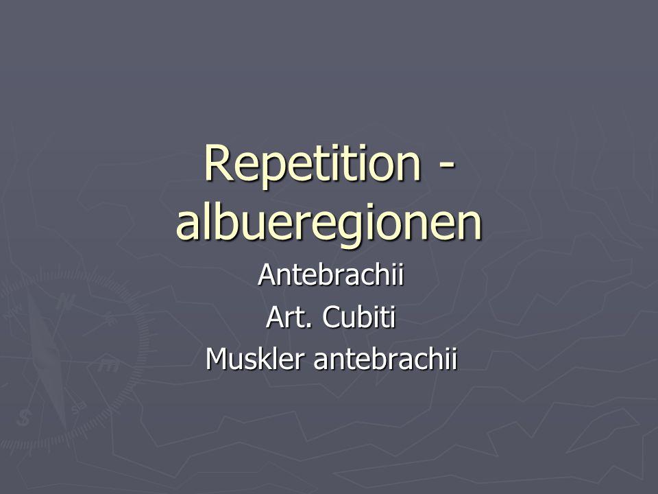 Repetition - albueregionen