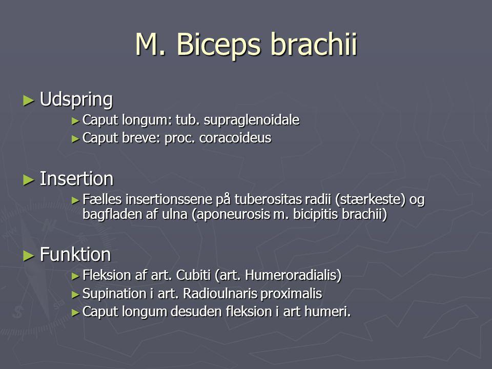 M. Biceps brachii Udspring Insertion Funktion