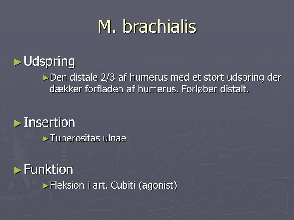 M. brachialis Udspring Insertion Funktion