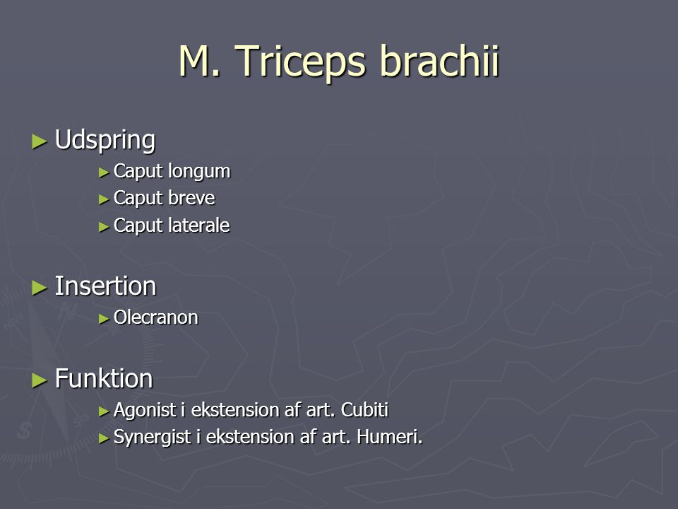 M. Triceps brachii Udspring Insertion Funktion Caput longum