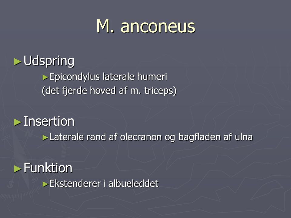 M. anconeus Udspring Insertion Funktion Epicondylus laterale humeri