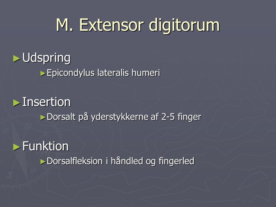 M. Extensor digitorum Udspring Insertion Funktion