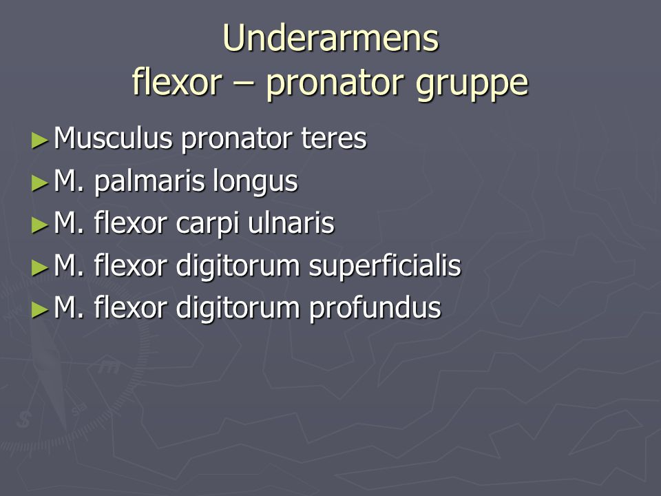 Underarmens flexor – pronator gruppe