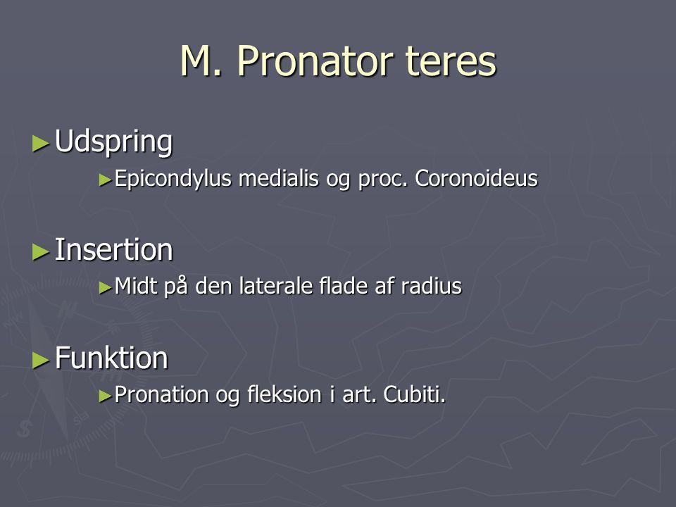 M. Pronator teres Udspring Insertion Funktion