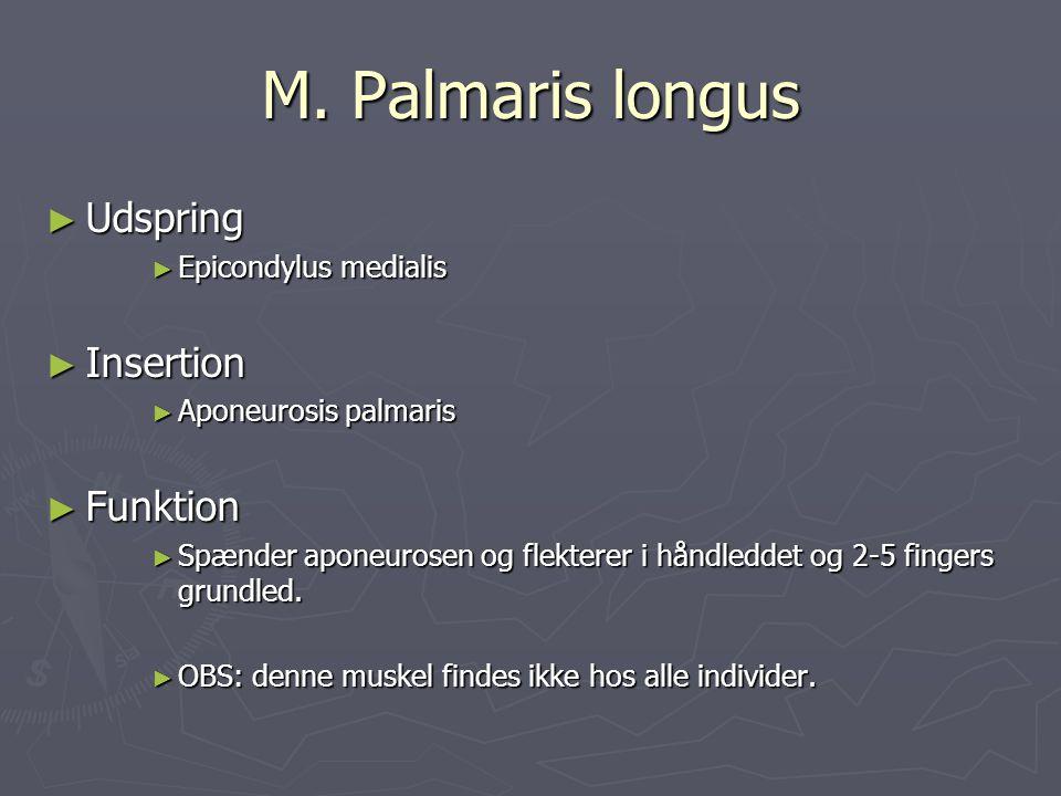 M. Palmaris longus Udspring Insertion Funktion Epicondylus medialis