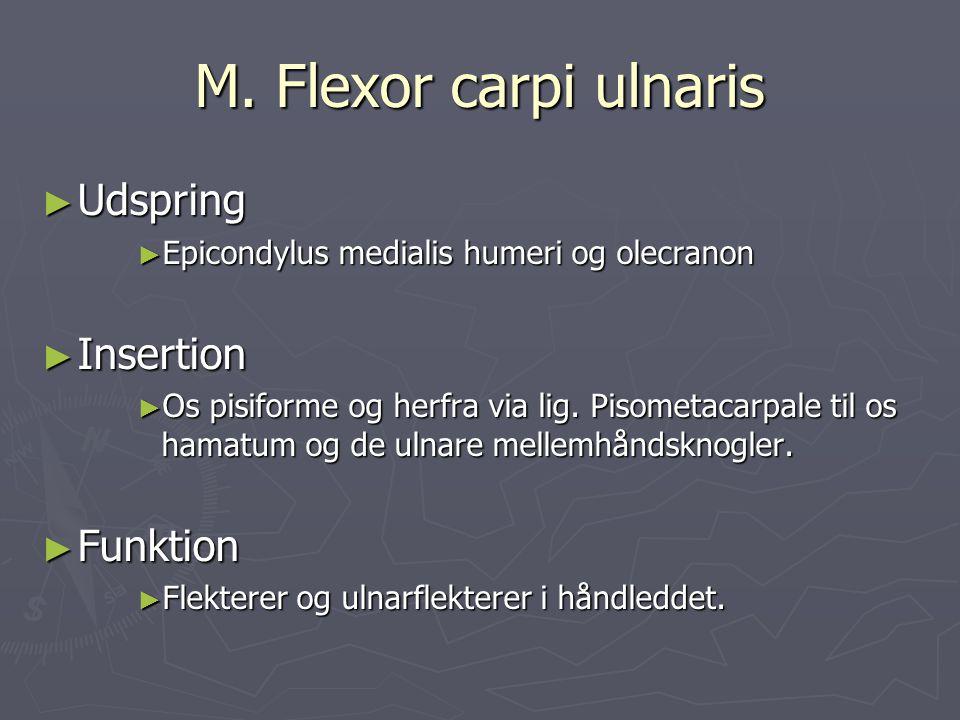 M. Flexor carpi ulnaris Udspring Insertion Funktion