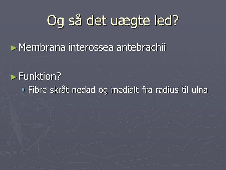 Og så det uægte led Membrana interossea antebrachii Funktion