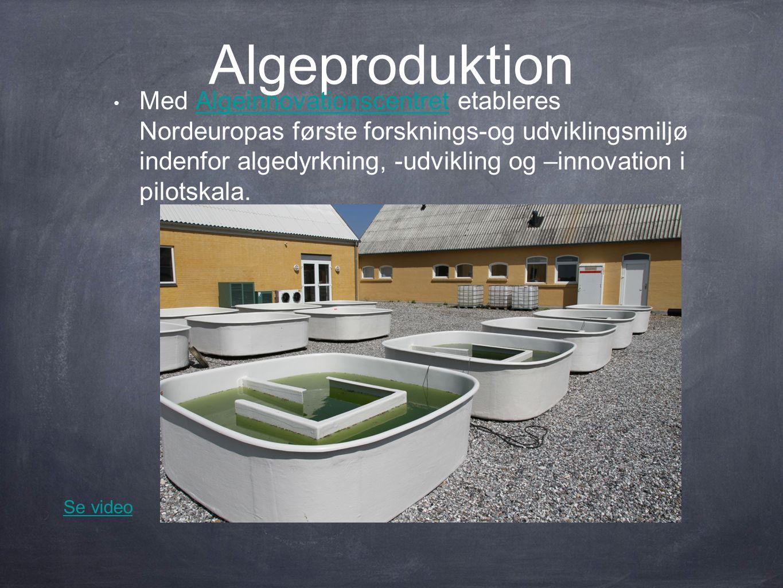Algeproduktion