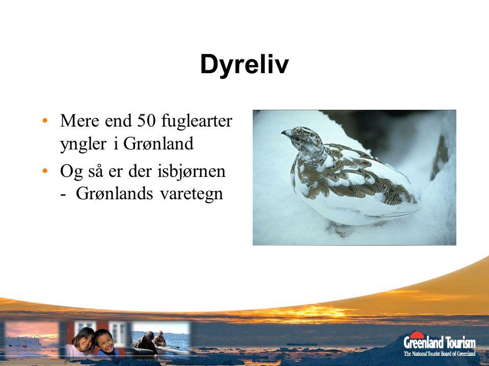 Dyreliv Mere end 50 fuglearter yngler i Grønland