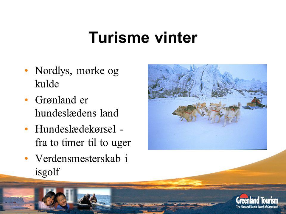 Turisme vinter Nordlys, mørke og kulde Grønland er hundeslædens land
