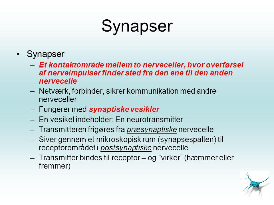 Synapser Synapser. Et kontaktområde mellem to nerveceller, hvor overførsel af nerveimpulser finder sted fra den ene til den anden nervecelle.