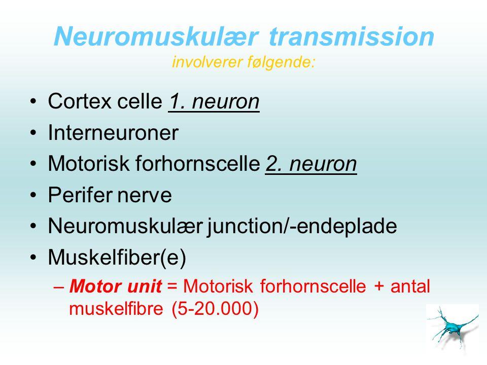 Neuromuskulær transmission involverer følgende: