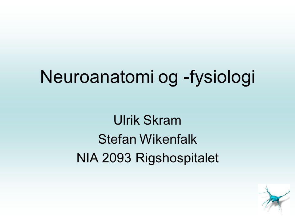 Neuroanatomi og -fysiologi