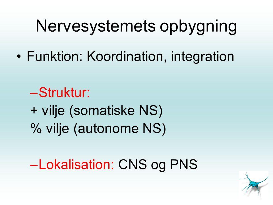 Nervesystemets opbygning