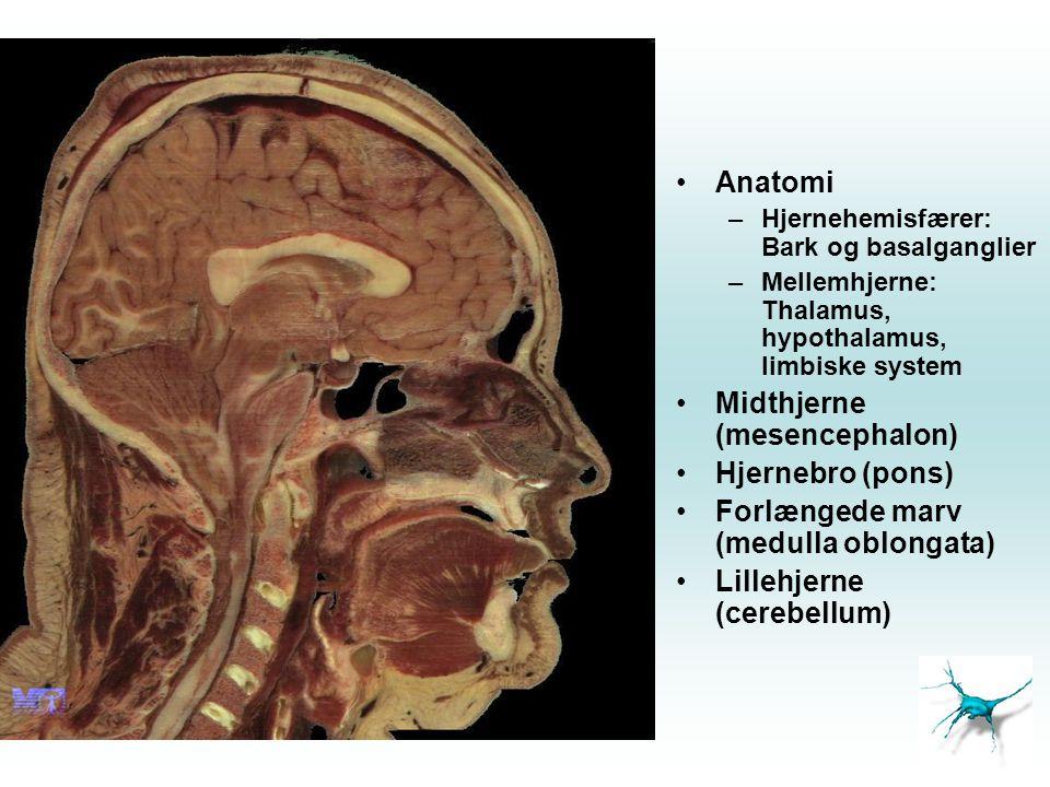Midthjerne (mesencephalon) Hjernebro (pons)