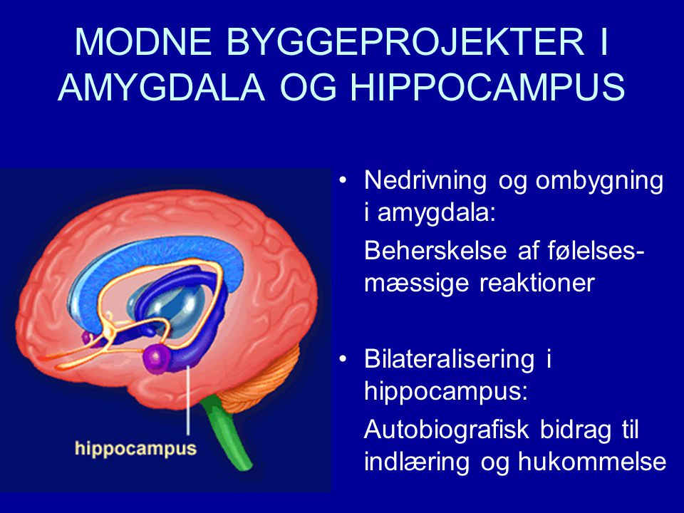 MODNE BYGGEPROJEKTER I AMYGDALA OG HIPPOCAMPUS