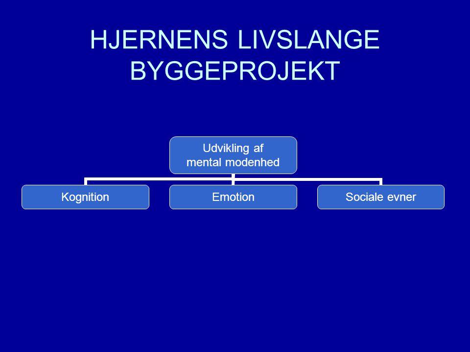 HJERNENS LIVSLANGE BYGGEPROJEKT
