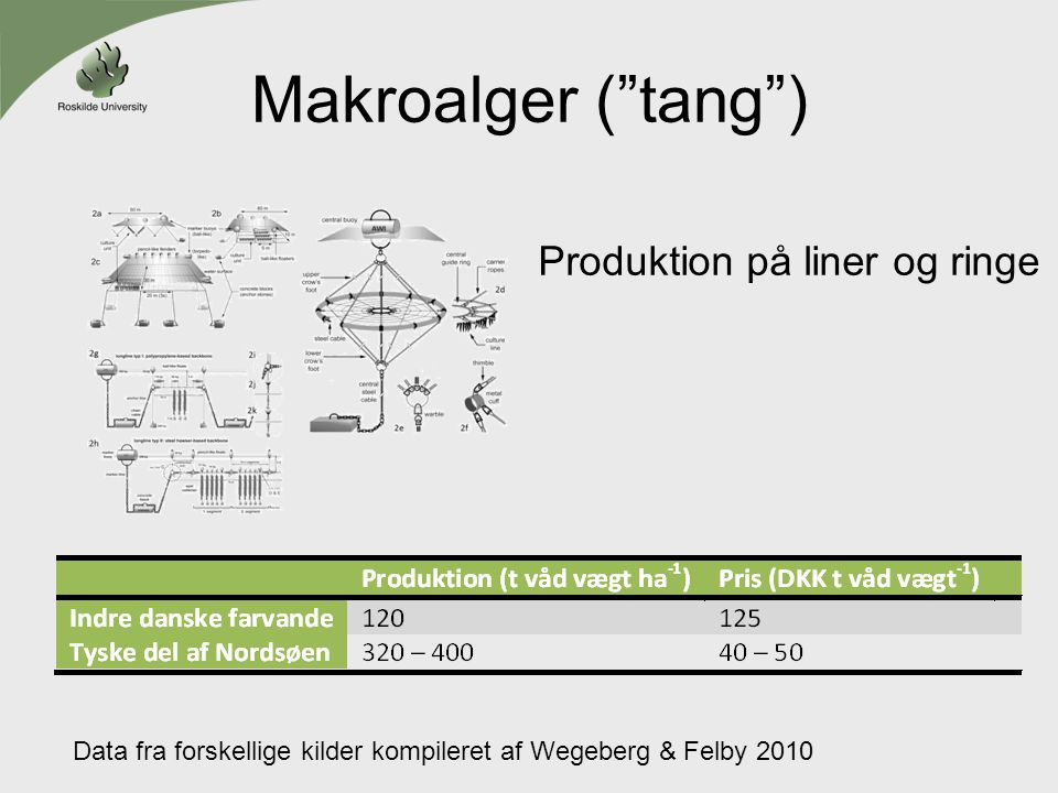 Makroalger ( tang ) Produktion på liner og ringe