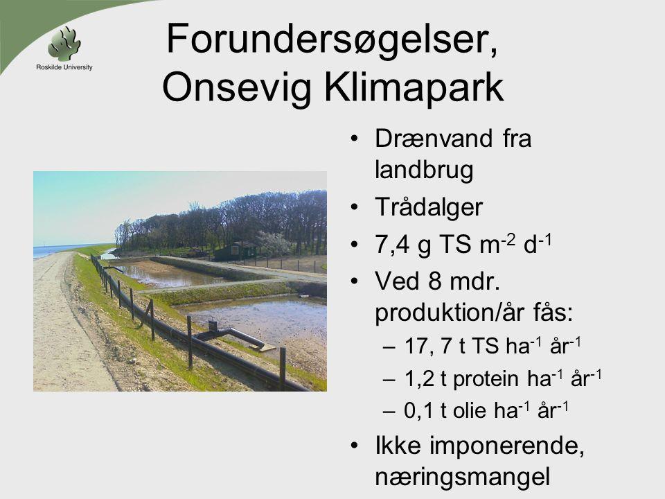 Forundersøgelser, Onsevig Klimapark