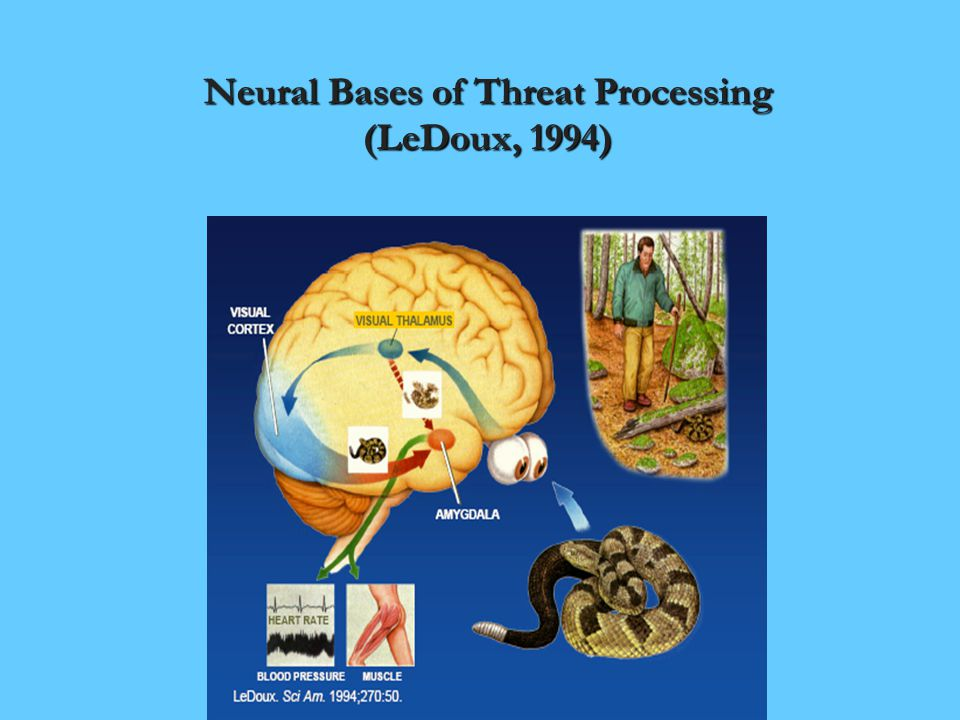 Neural Bases of Threat Processing (LeDoux, 1994)