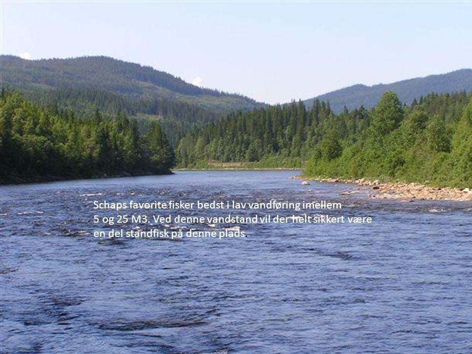 Schaps favorite fisker bedst i lav vandføring imellem
