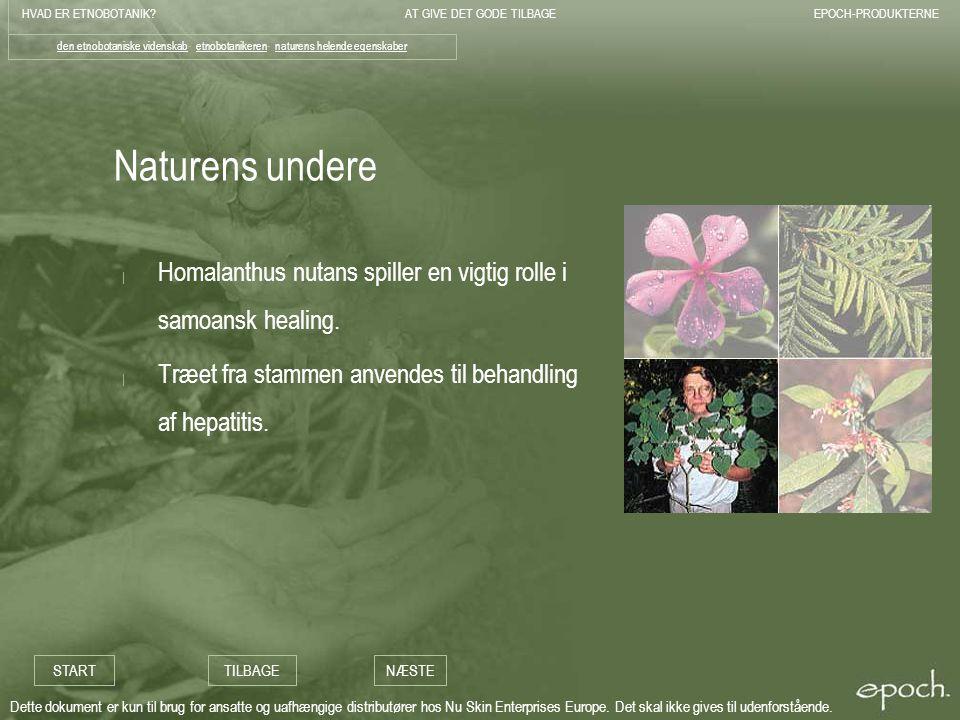 den etnobotaniske videnskab- etnobotanikeren- naturens helende egenskaber