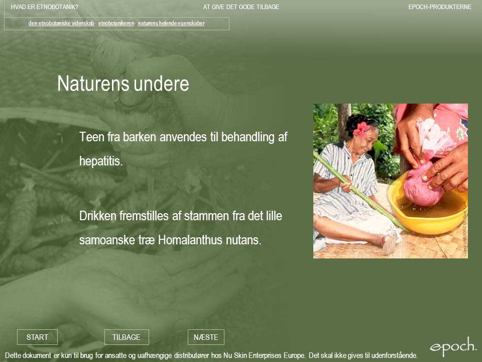 Naturens undere Teen fra barken anvendes til behandling af hepatitis.