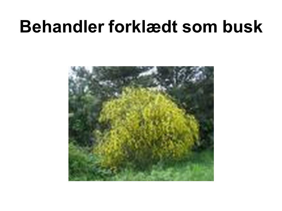 Behandler forklædt som busk