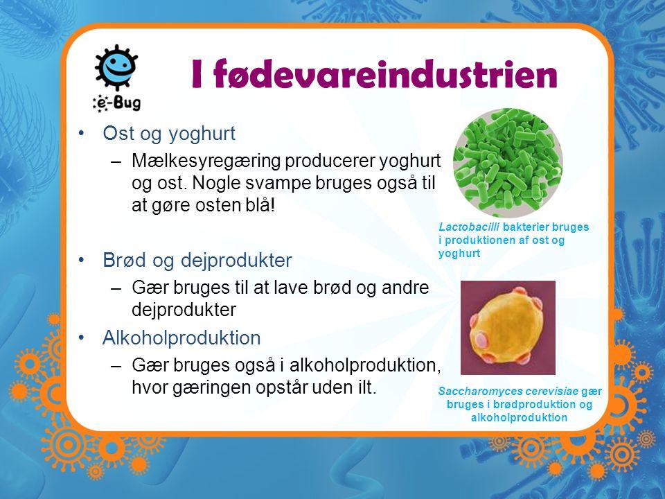 I fødevareindustrien Ost og yoghurt Brød og dejprodukter