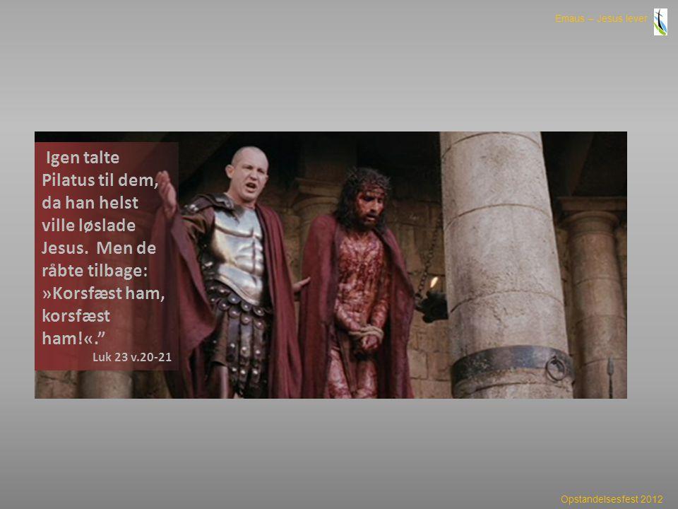 Igen talte Pilatus til dem, da han helst ville løslade Jesus