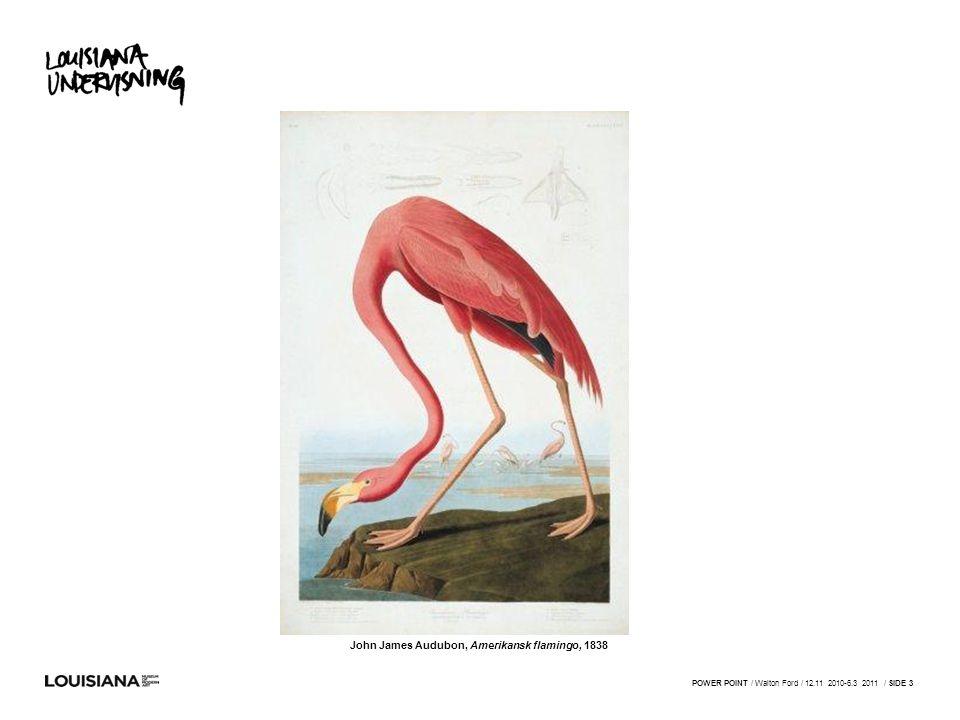 John James Audubon, Amerikansk flamingo, 1838