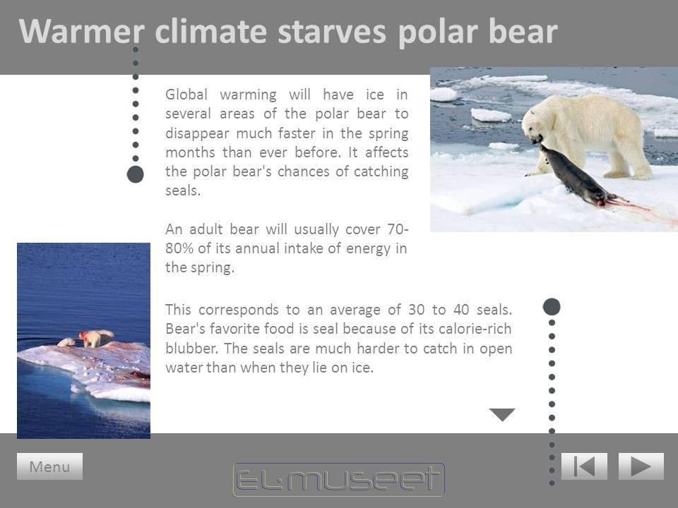 Warmer climate starves polar bear