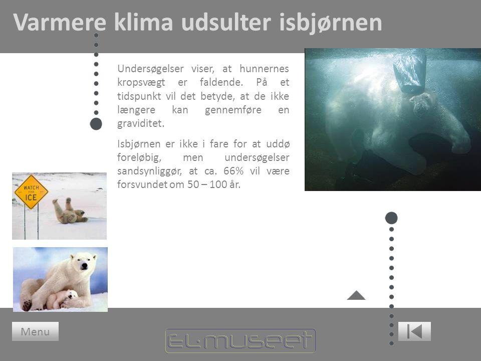 Varmere klima udsulter isbjørnen