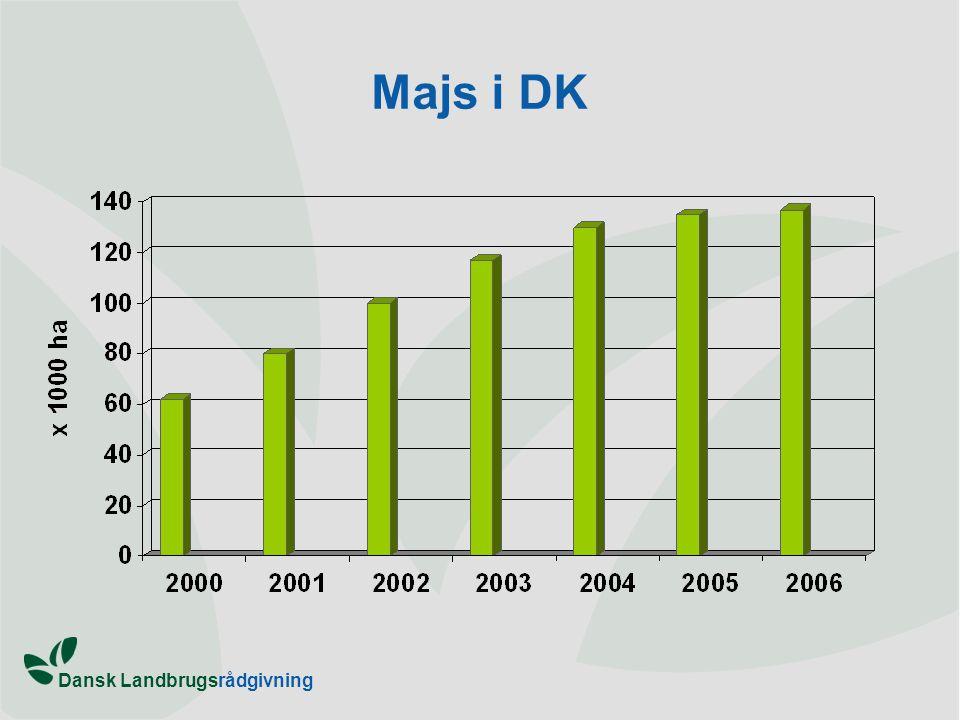 Majs i DK
