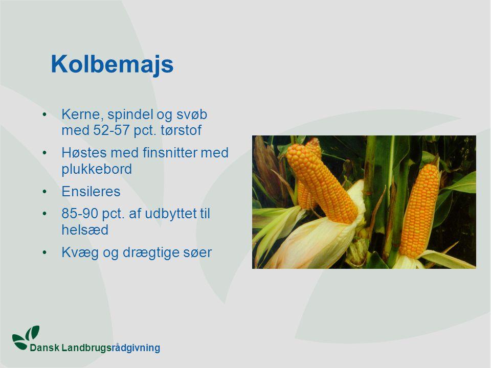 Kolbemajs Kerne, spindel og svøb med 52-57 pct. tørstof