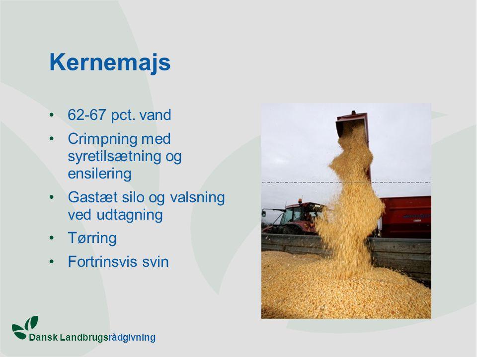 Kernemajs 62-67 pct. vand Crimpning med syretilsætning og ensilering