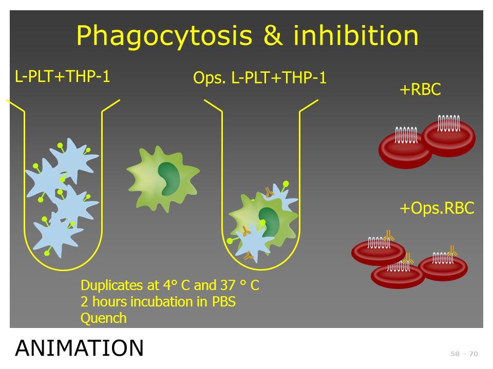 Phagocytosis & inhibition