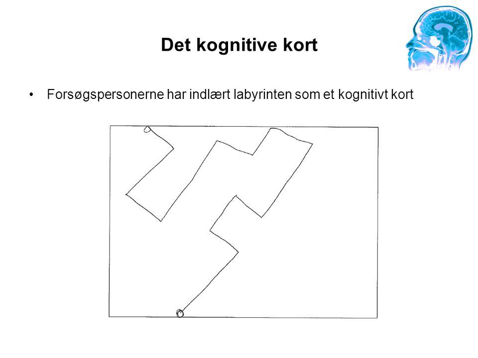 Det kognitive kort Forsøgspersonerne har indlært labyrinten som et kognitivt kort