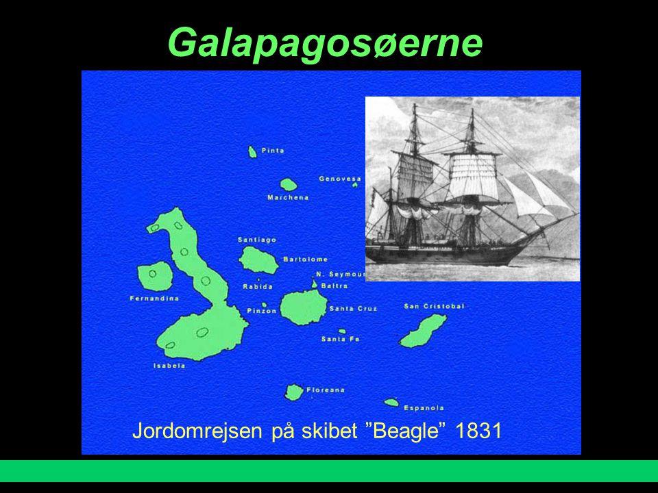 Galapagosøerne Jordomrejsen på skibet Beagle 1831