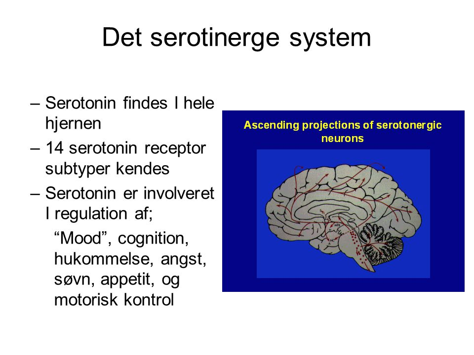Det serotinerge system