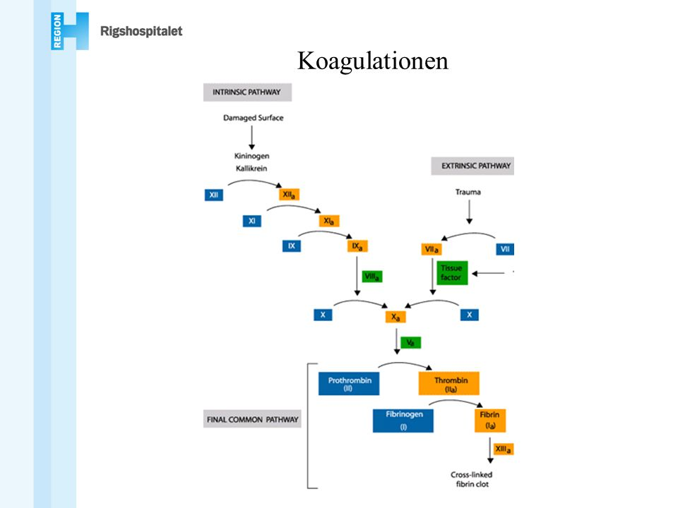 Koagulationen