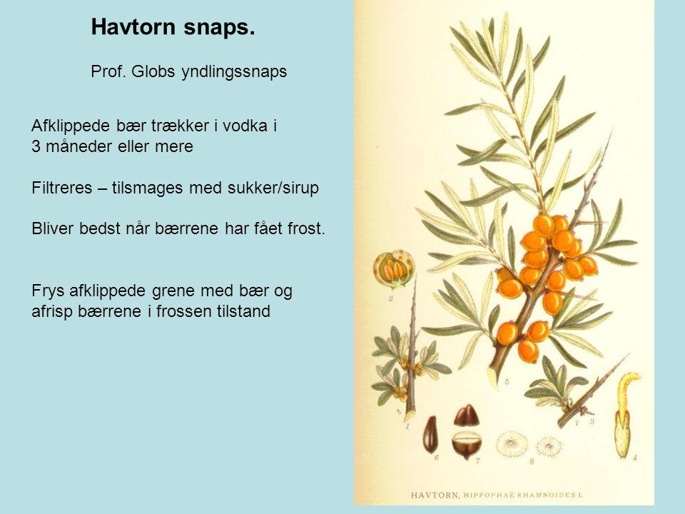 Havtorn snaps. Prof. Globs yndlingssnaps